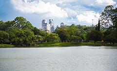 A pesquisa utilizou o Parque Ibirapuera, em São Paulo, para fazer o levantamento dos serviços ecossistêmicos - Imagem: Wikimedia